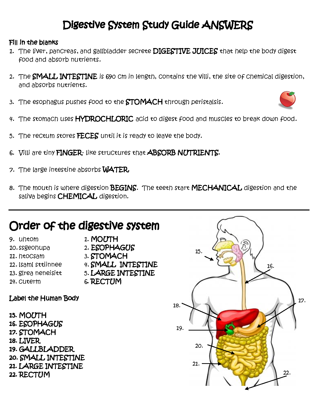 Image For Digestive System Study Guide