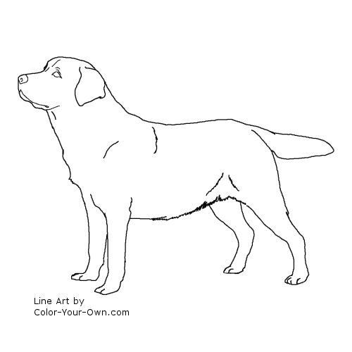 Labrador Retriever Dog Line Art