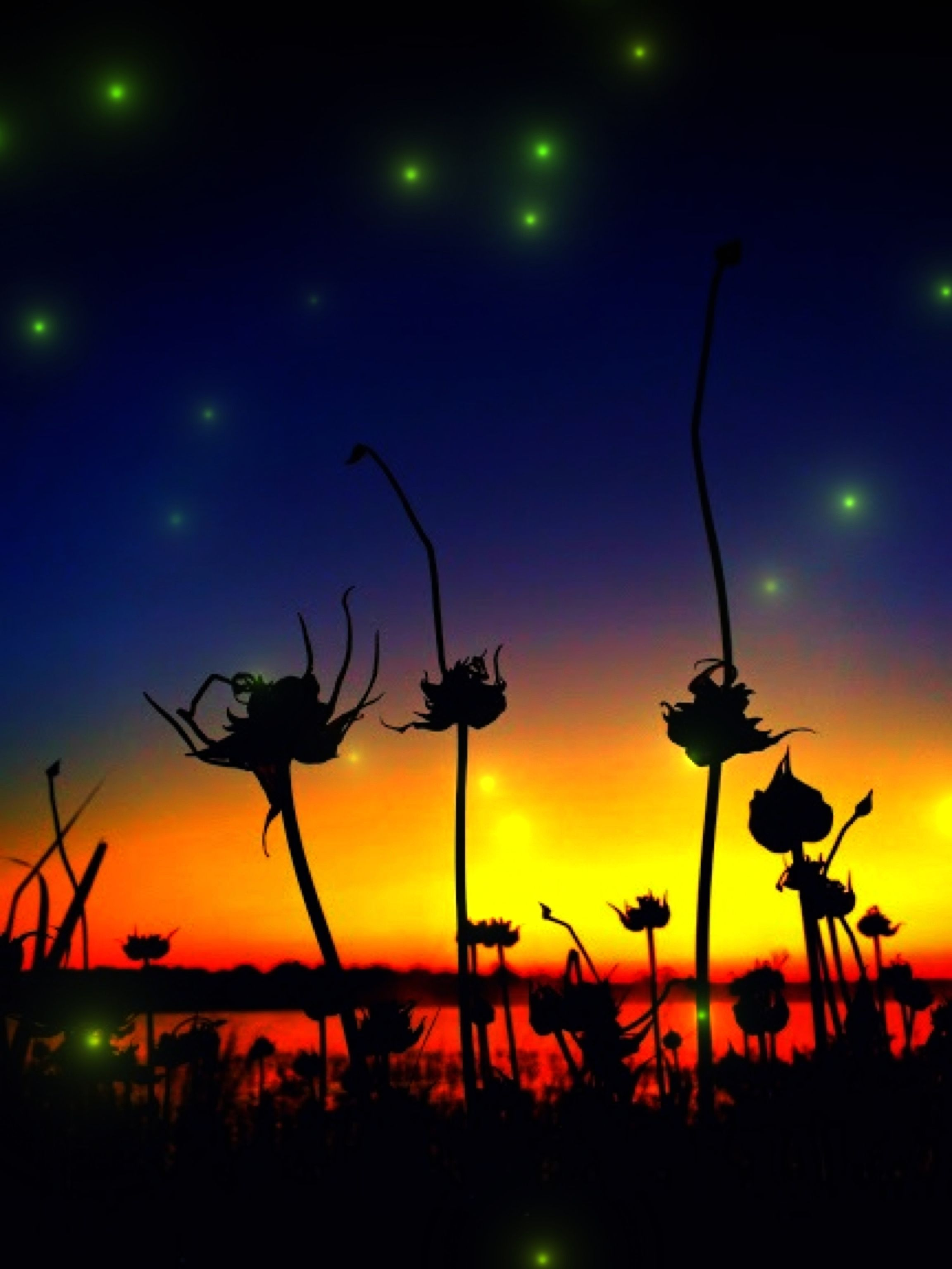 Black Orchids and fireflies after sunset