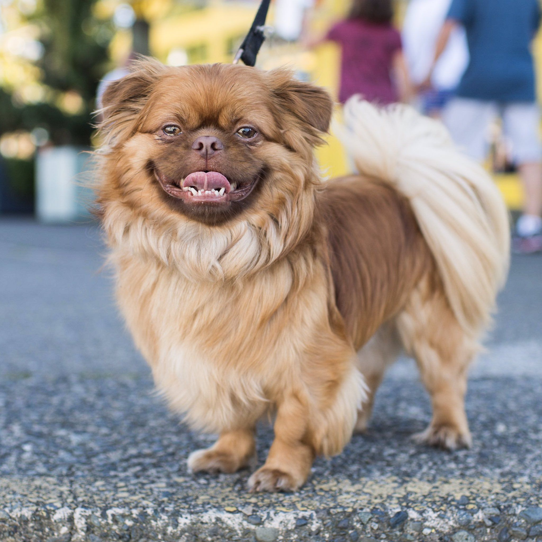 The Dogist On Shih Tzu Best Dogs Animals