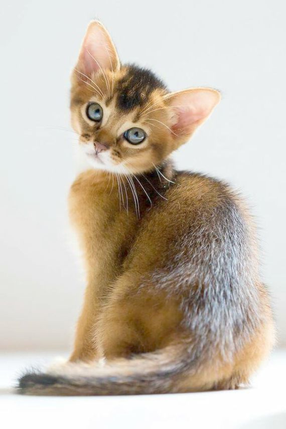 Kittens Near Me For Adoption Off Cute Wild Baby Animals Videos Round Kittens For Sale Pet Store Till D Cute Puppies And Kittens Baby Animals Baby Animal Videos