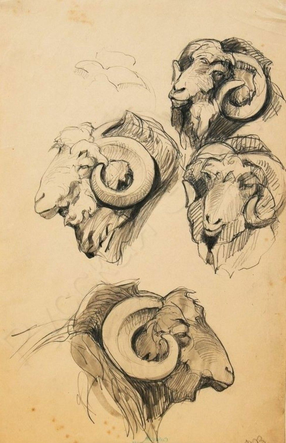 Dark Academia Sketchbook Sketches Pencil Drawings Of Animals Animal Drawings