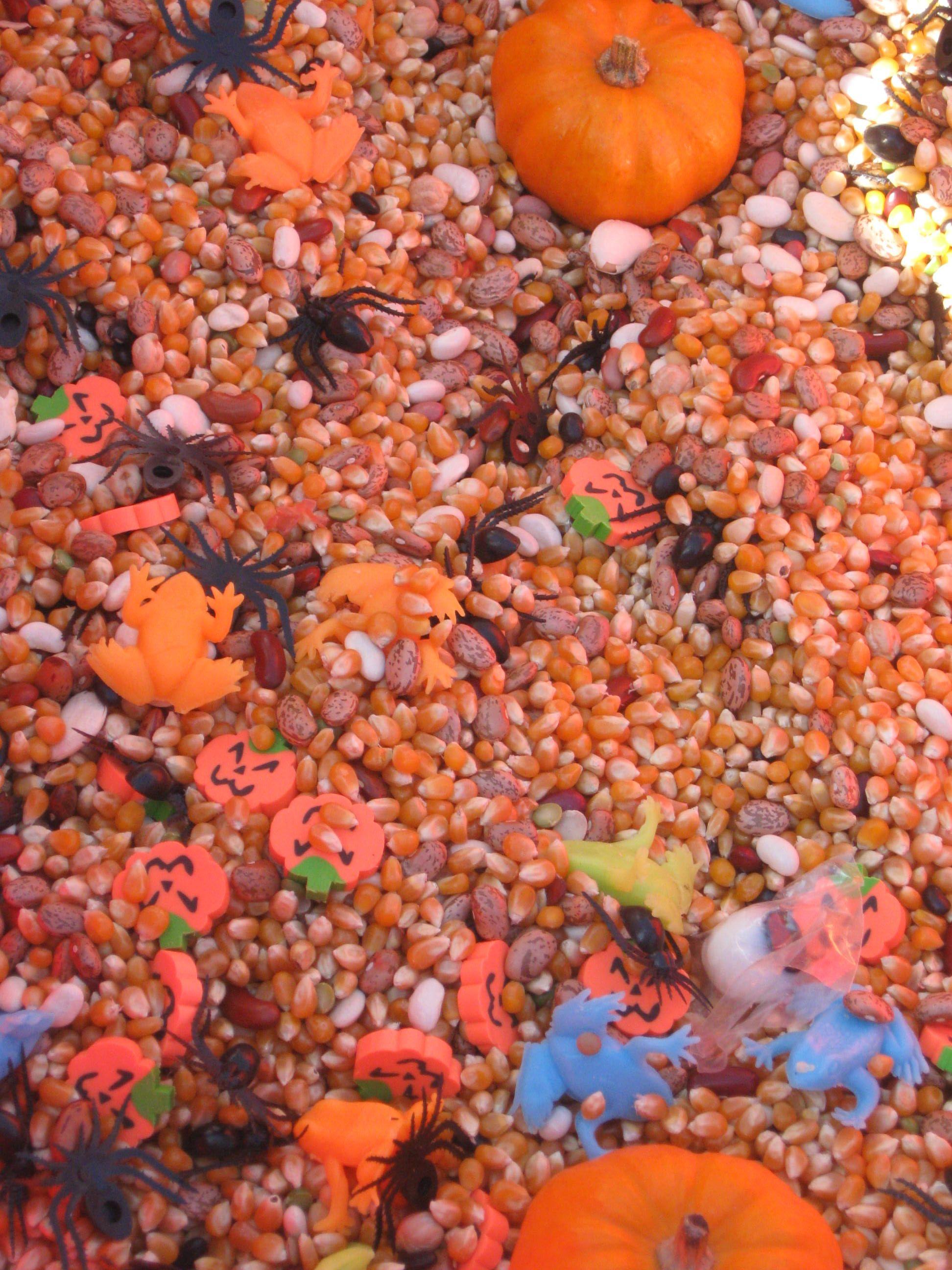 fall sensory table idea candy corn popcorn seeds pumpkins etc