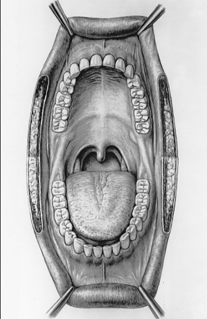 If You Touch The Roof Of Your Mouth With Your Tongue And Breathe This Happens To Your Body Anatomy Art Mouth Anatomy Human Mouth