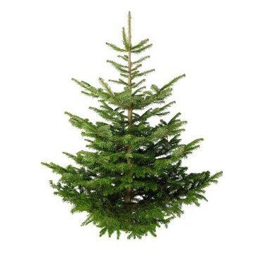 Free Christmas Trees At Homebase Gratisfaction Uk Christmas Tree Images Tree Photoshop Real Xmas Trees