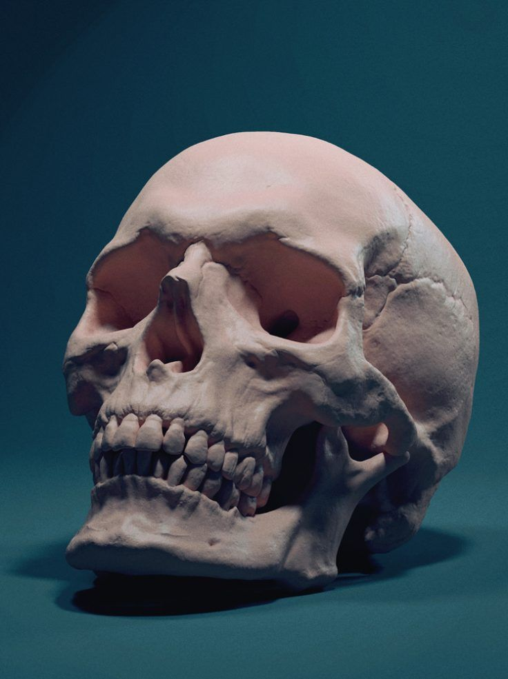 August scenes gallery trophy winner! Skull By Adam Skutt | ANATOMIA ...