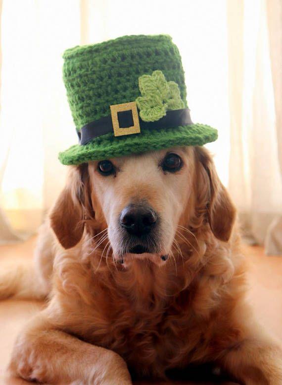 41d72431c74 St. Patrick s Day Dog Hat