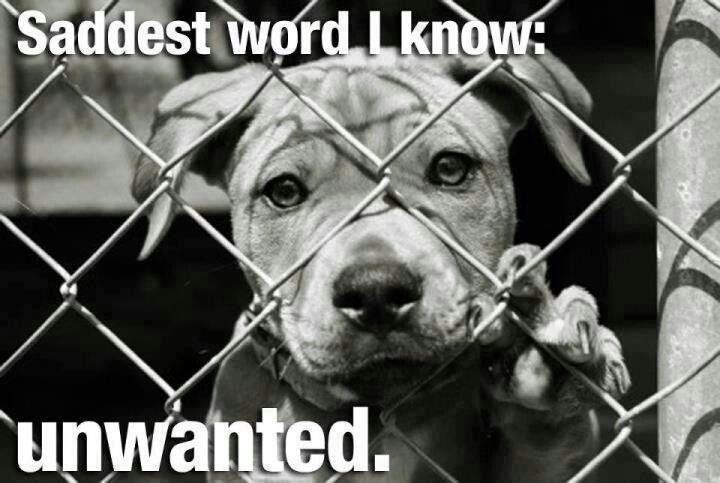 Unwanted Unloved Please Adopt Give Them Hope Of A New Beginning Shelter Dogs Animal Shelter Dog Adoption