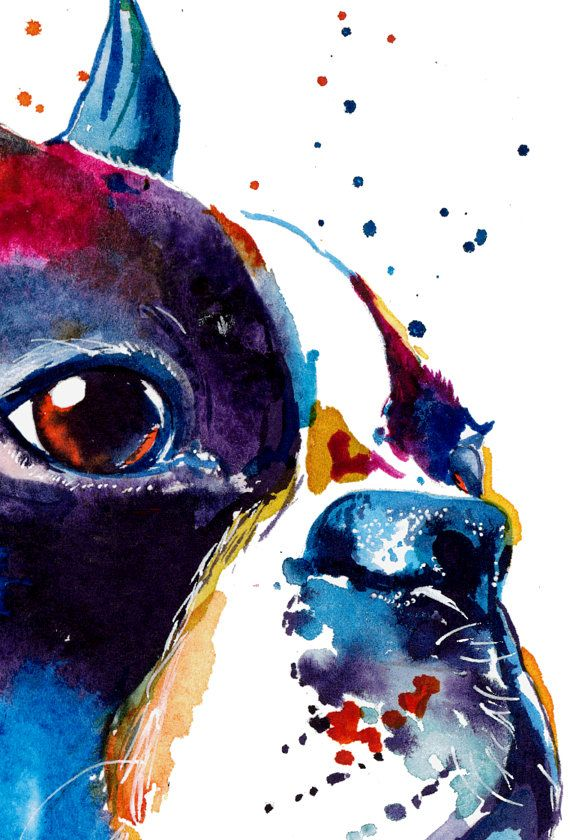Art Colore Aquarelle Boston Terrier Livraison Gratuite Boston