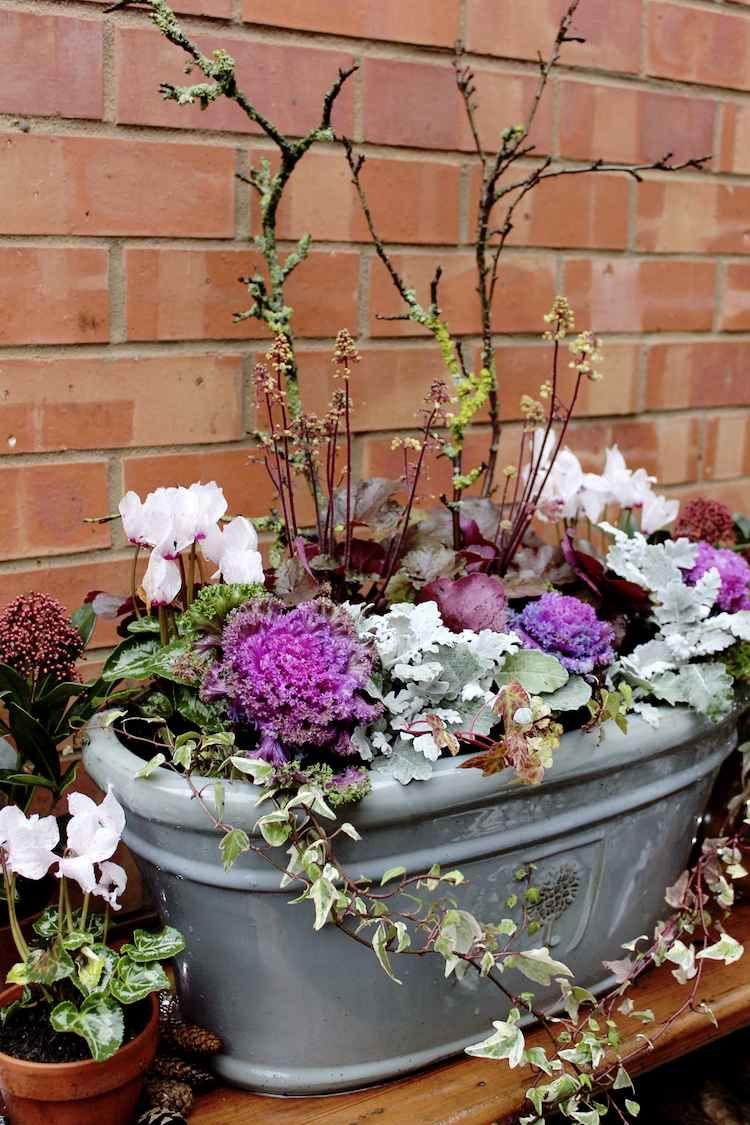 Jardin d\'hiver en pot- plantes ornementales à privilégier, trucs et ...