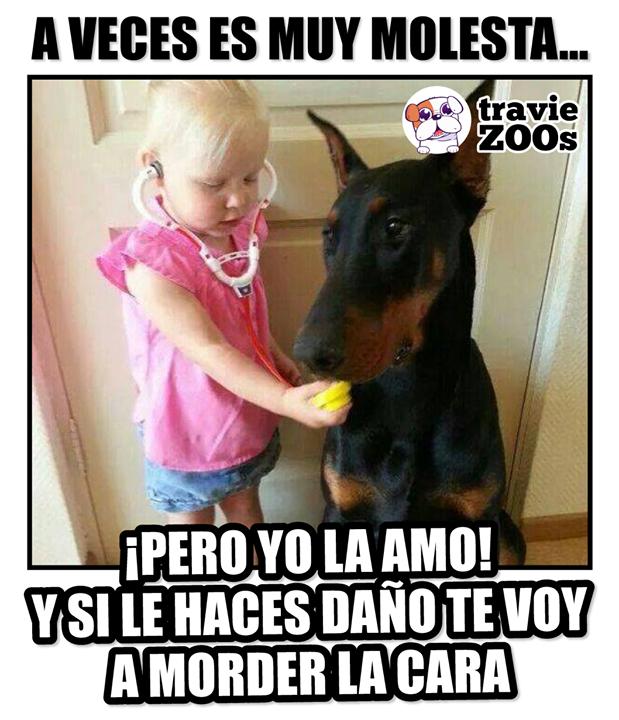 Quedas Advertido Perros Doberman Memes Perros Humor De Mascotas