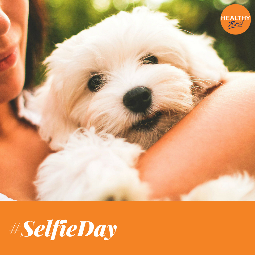 Did You Know Today Is Selfieday Show Us Your Best Pet Selfies Or Head Over To June S Petportrait Competition Album To Healthy Pets Pets Pet Portraits