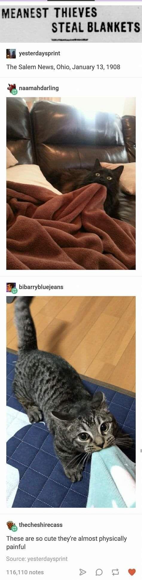 25+ frische Tumblr-Memes, die dich sehr unterhalten werden #tumblrfunny 25+ frische Tumb …