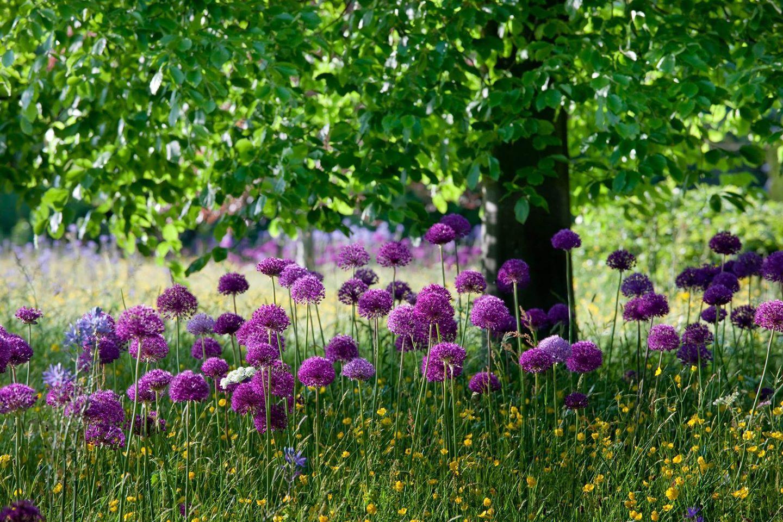 Landscape flower garden  Highgrove Wildflower Meadow  Barrells Walled garden  Pinterest