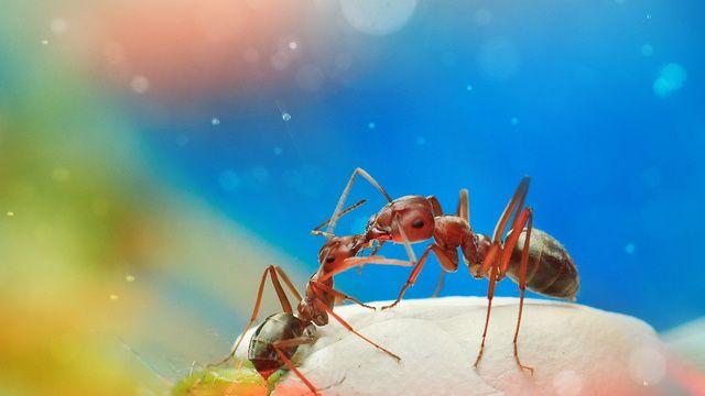ファンタジーで異世界のような雰囲気を醸し出す 美麗な昆虫のマクロ
