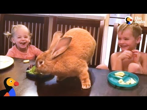 Giant Bunny Has The Best Family - COCOA PUFF   The Dodo - YouTube