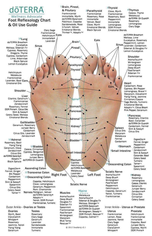 wart on foot reflexology)