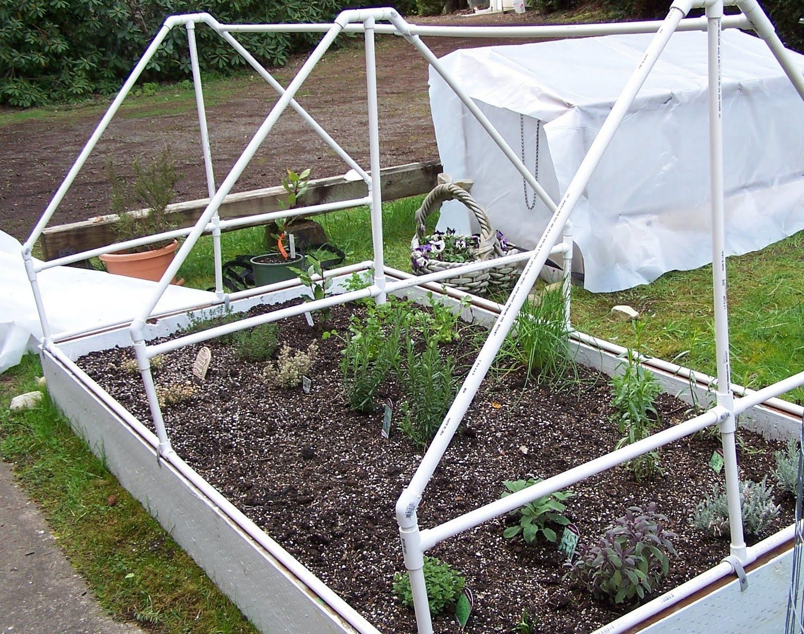 Herb garden with pvc pipe supports for a cover garden - Cover crops for vegetable gardens ...