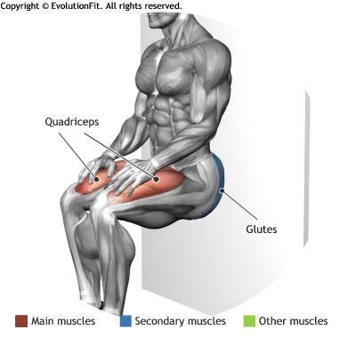 quadriceps  isometric wall squat  physical fitness