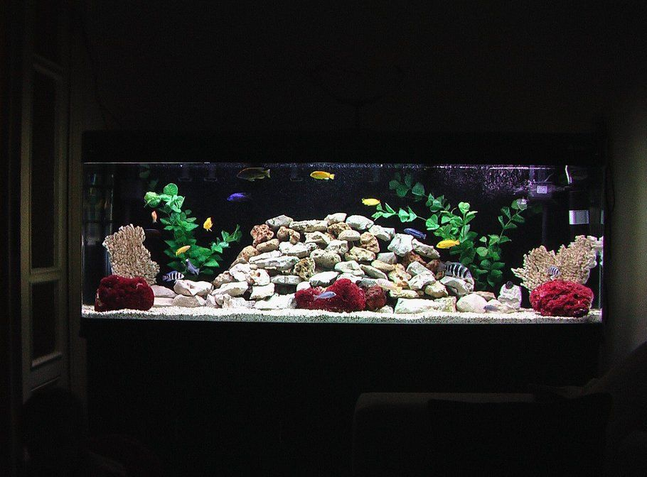New rock design for my african cichlid tank fishy for African cichlid rock decoration