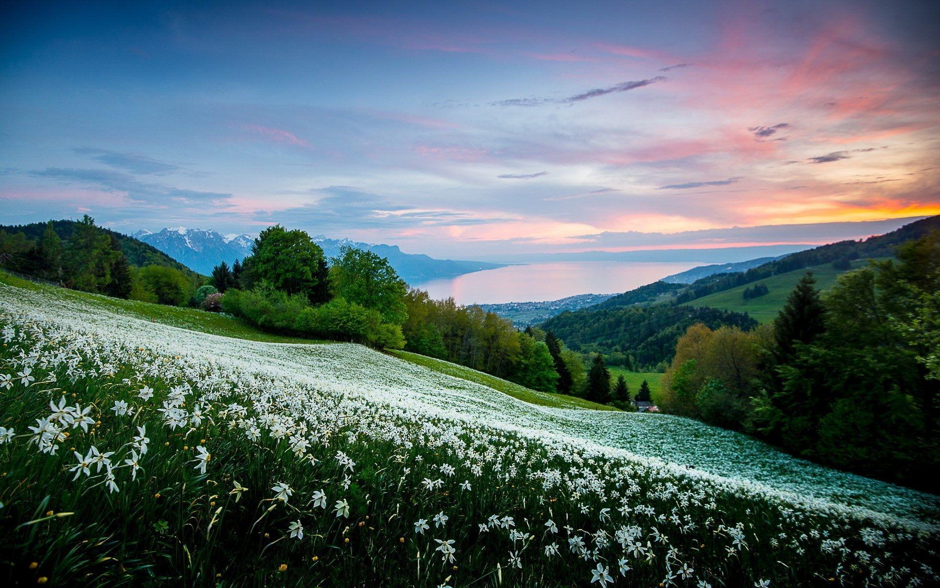 Beautiful Scenes Of Nature Hd Images 1920x1200 1080p Wallpaper Hdwallpaper Desktop Pejzazhi Zhivopisnye Pejzazhi Idei Ozeleneniya