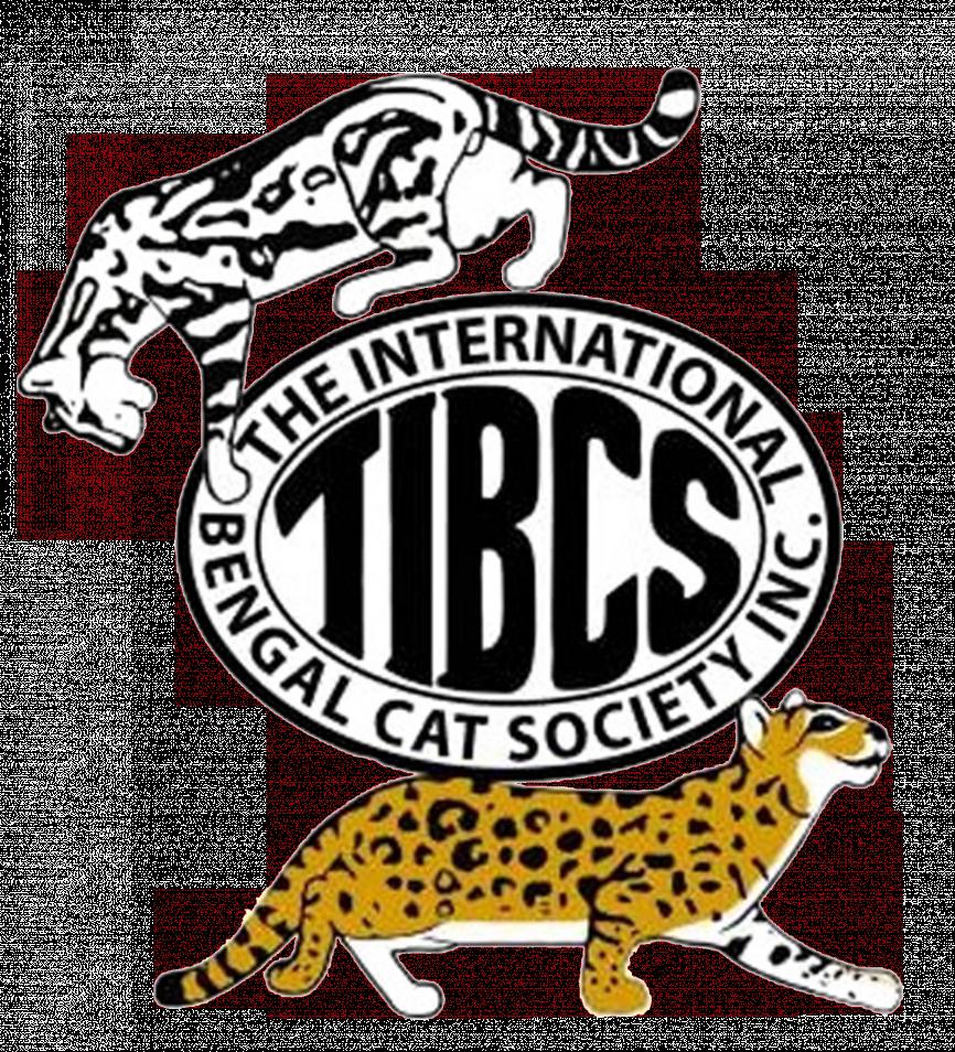 Bengal Cat Breeders In Michigan Bengal Cat Club Bengal