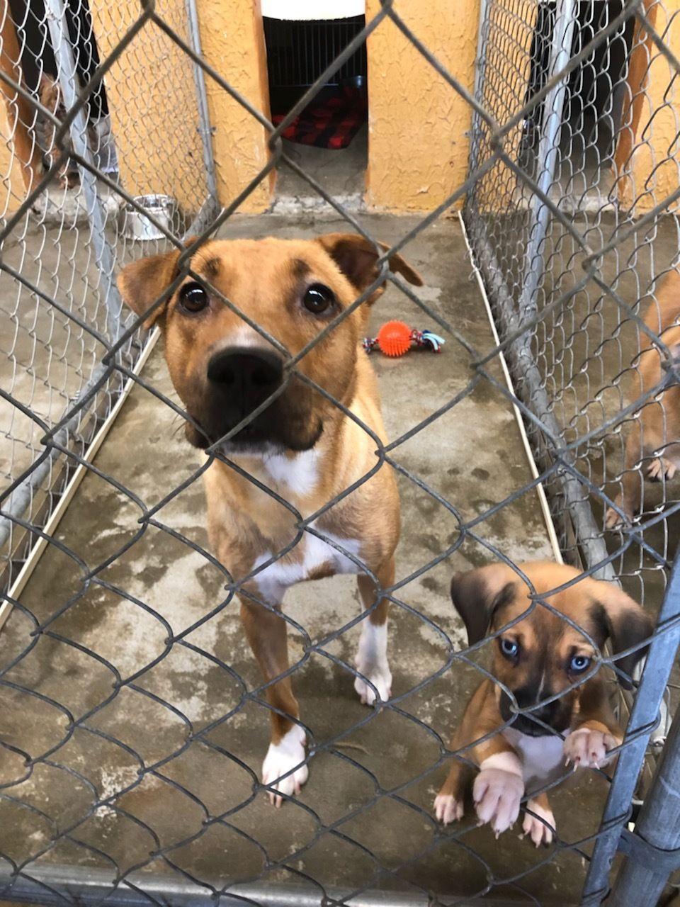 Park Art|My WordPress Blog_Robeson County Animal Shelter Lumberton Nc
