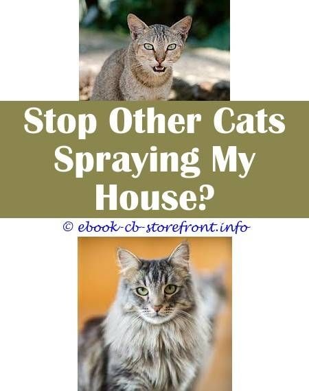 everywhere cats sperm Do boy
