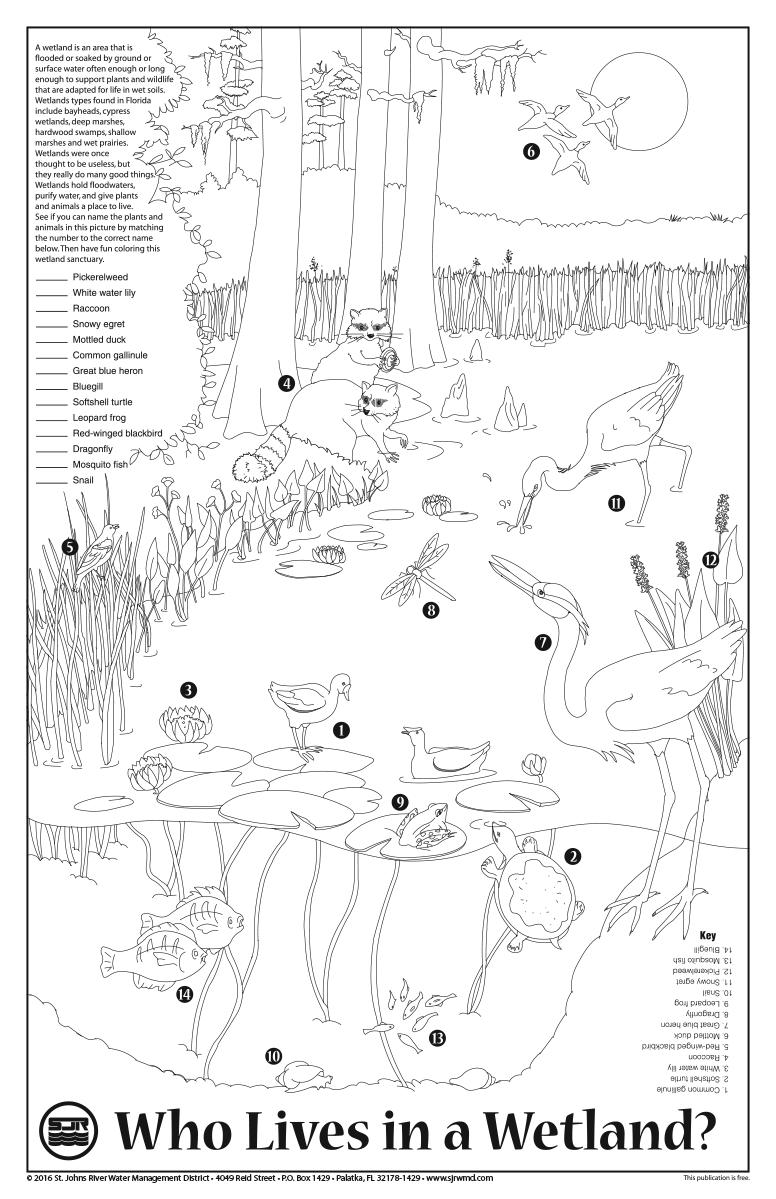 Teacher Resources Sjrwmd Wetlands Activities Environmental Education Activities Elementary Art Projects [ 1199 x 776 Pixel ]