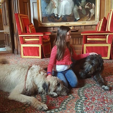 I Think She Was Missing Our Own Dogs At This Point We Had Been In Ireland For Nearly 3 1 Castles In Ireland Ashford Castle Ireland Ireland Family Vacations