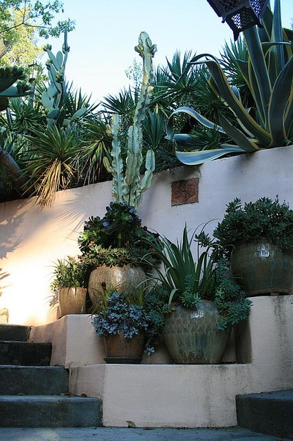 Pots with succulents at entry stairs from street