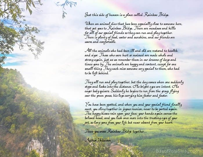 """Rainbow Bridge"" Free Printable Poem {Pet Loss} 
