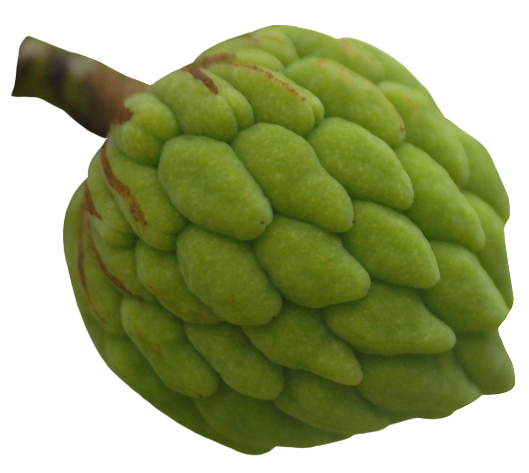 Custard Apple PNG Image Free png, Png images, Yellow apple
