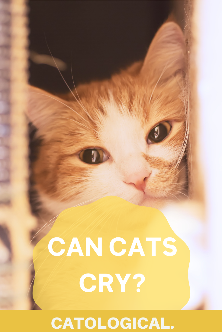 Pin On Pets Around Pinterest