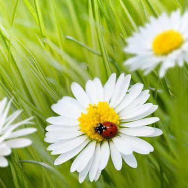 La llegada de la primavera y sus flores | Primavera paisajes ...