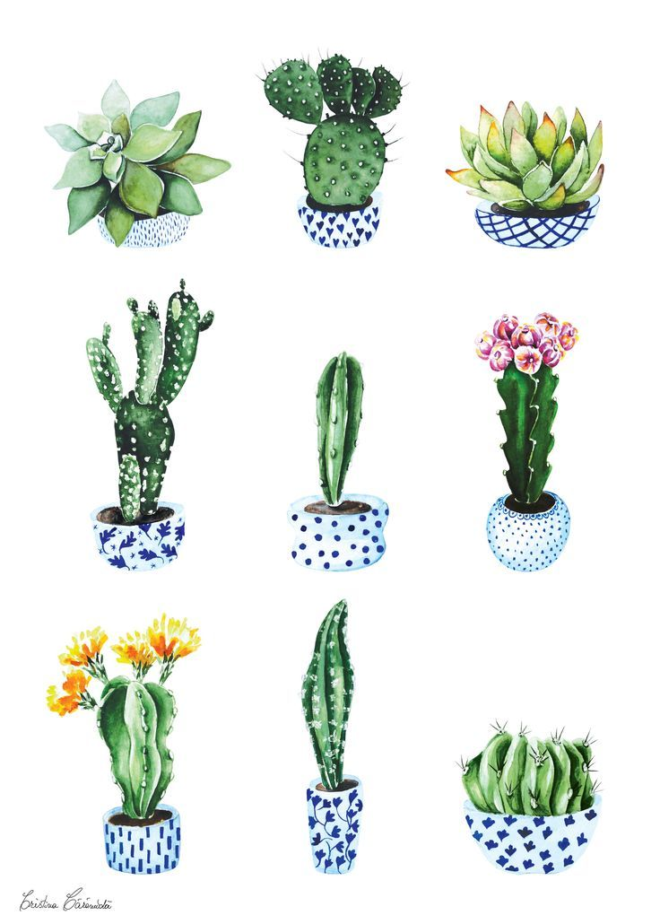 image result for cactus in blue and white cache pot packaging pinterest cacti cactus. Black Bedroom Furniture Sets. Home Design Ideas