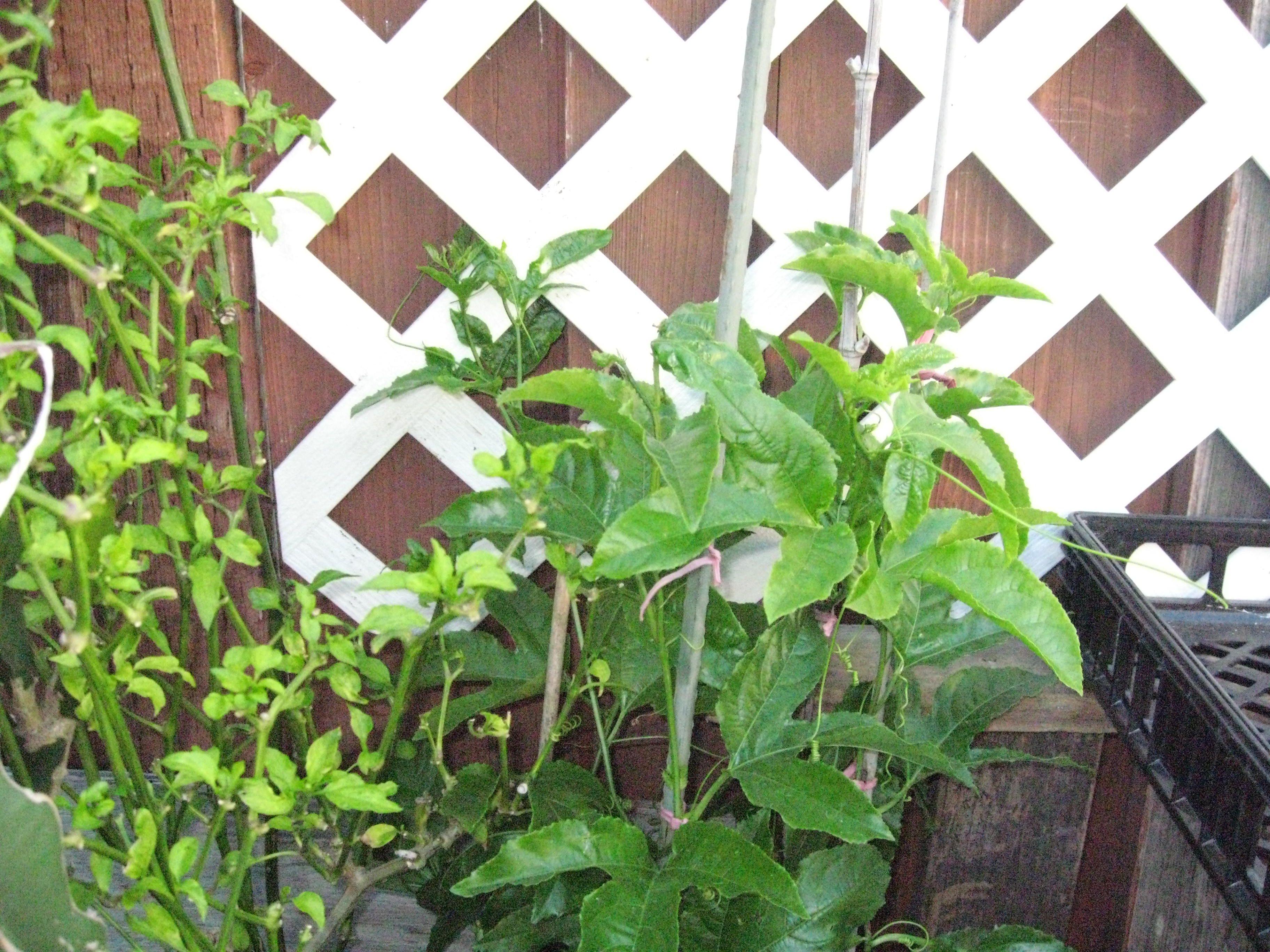 Veggie garden inspiration  Easy Vertical Gardening Ideas for Beginners  Garden  Pinterest