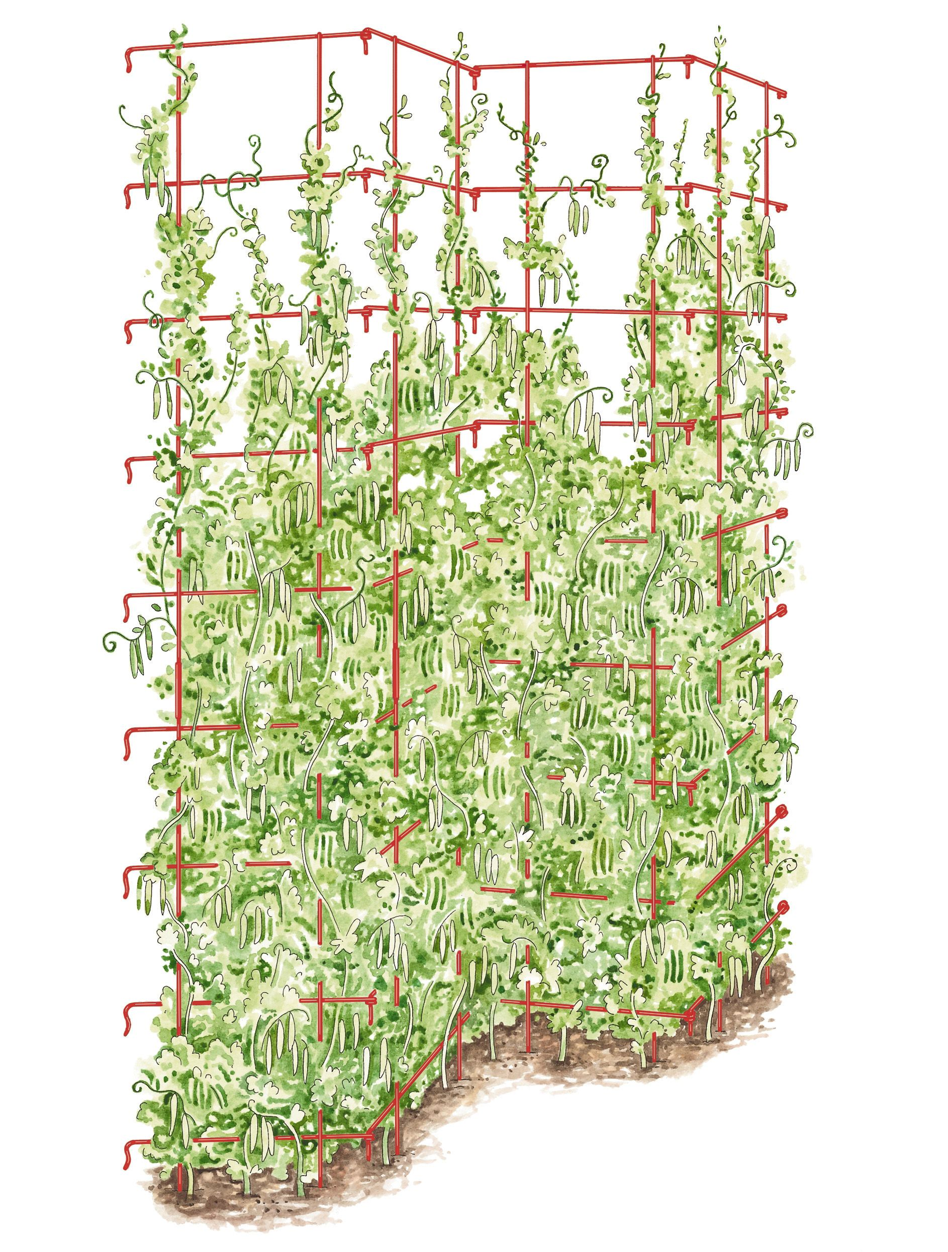 Tall Expandable Pea Trellis | Buy from Gardener\'s Supply I see my ...