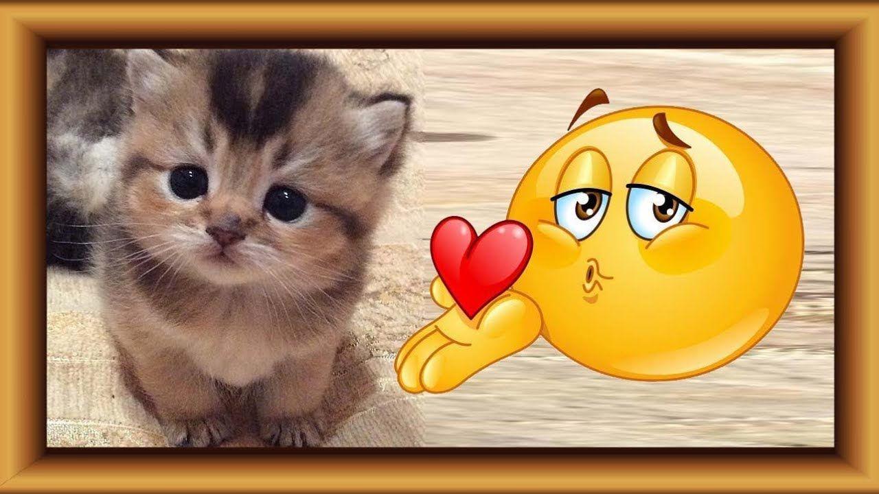Animated Emoticons Having Fun New Cute Kitten Pet Lotusbaby Tv