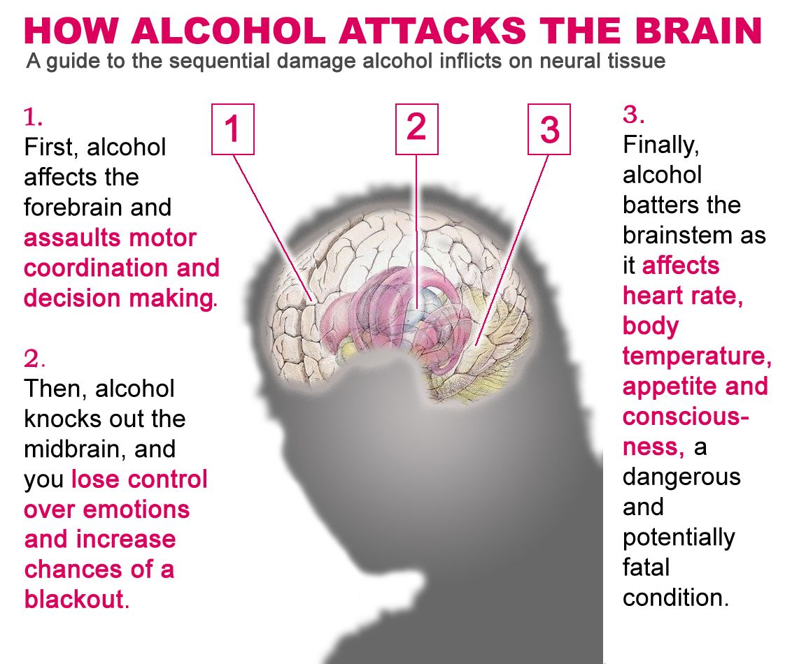 Alcohol Does Not Kill Brain Cells | An Apple A Day