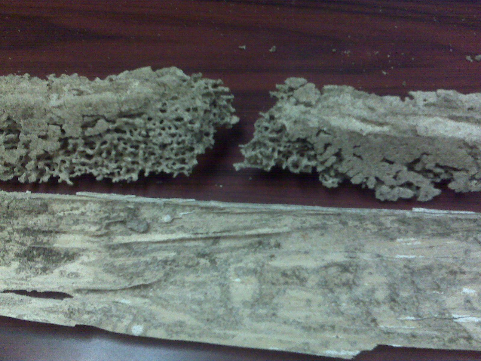 Termite Damage To Window Sill