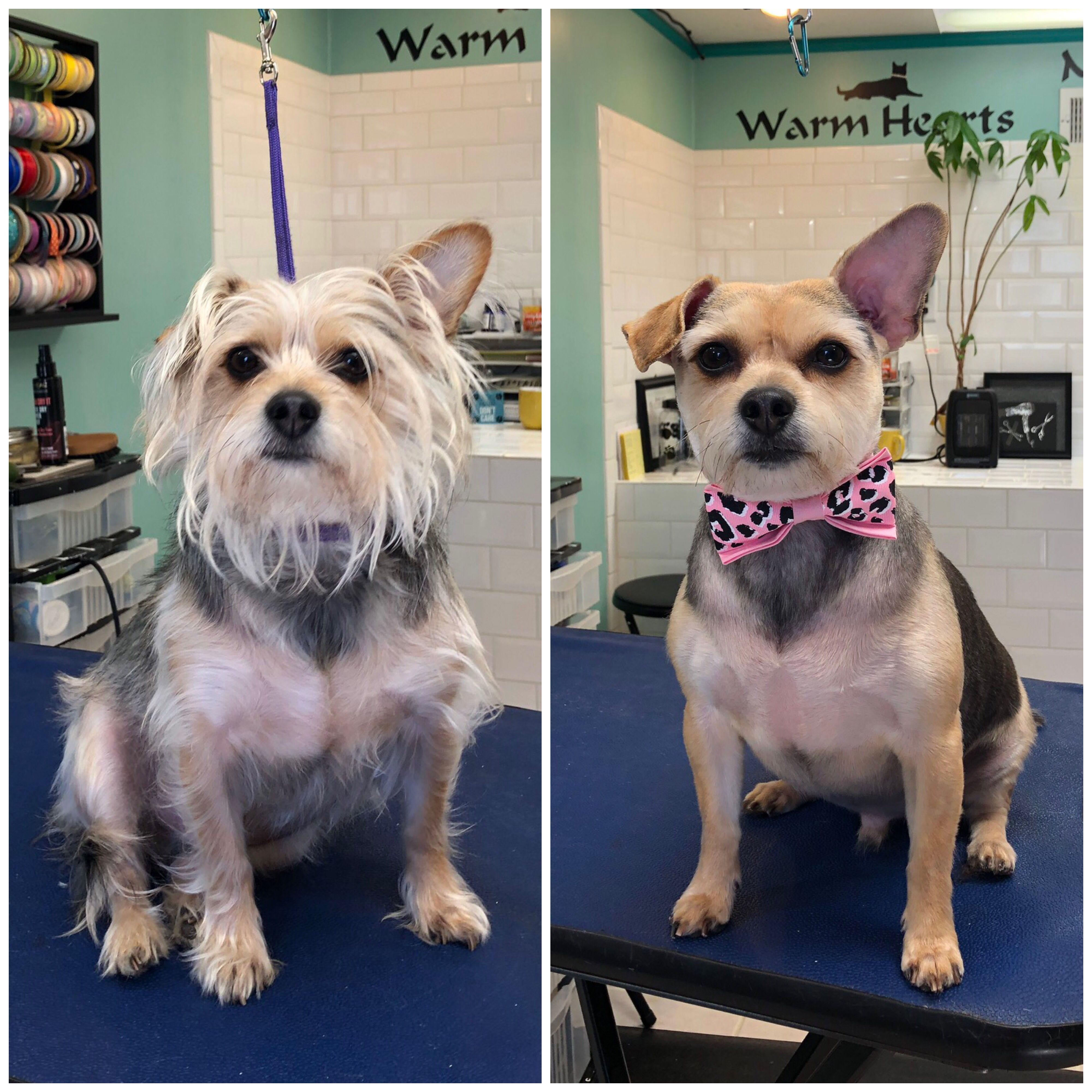 Pin By Dogwood Grooming Spa Llc On Happy Clients In 2019 Dogs