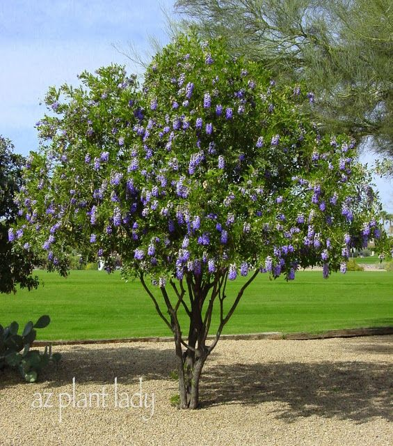 A Wonderful Dilemma Part 2 Desert Landscaping Desert Garden Desert Trees