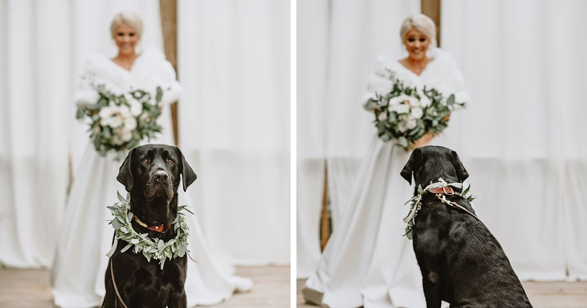 Bride's Decision To Bring Her Dog To Her 'First Look