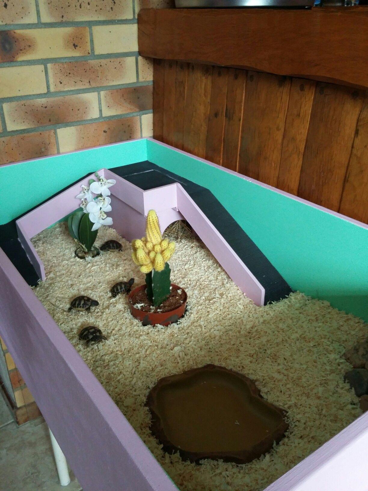 enclos interieur tortue