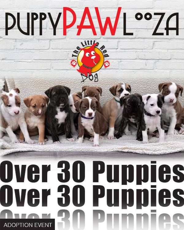 May 5th. • PuppyPAWlooza PetSmart • Adoption Event This