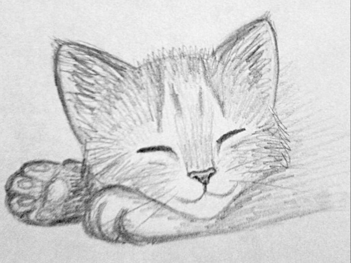 Kittens Pencil Drawings Of Animals Kitten Drawing Animal Drawings