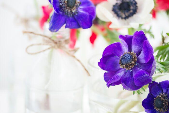 Anemone Flower Meaning Anemone Flower Flower Meanings Anemone