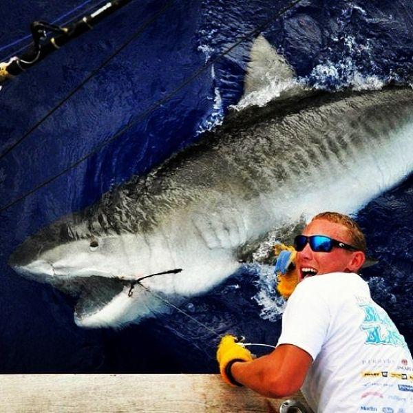 Tiger Shark Testosterone