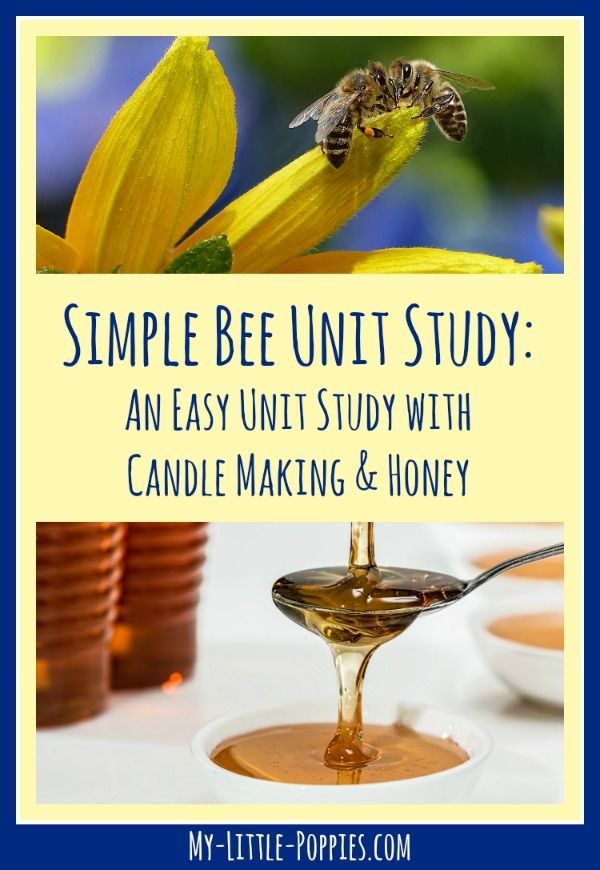 Simple Bee Study with Candle Making & Honey